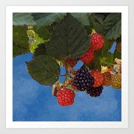 Bramble Branch Black and Red Blackberries Art Print