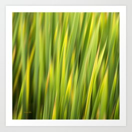 Green Nature Abstract Art Print