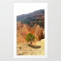 Bryce Canyon Tree Art Print