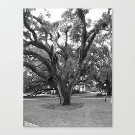 Old Oak Canvas Print