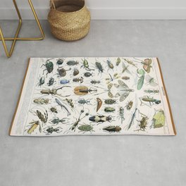 Adolphe Millot- Vintage Insect Print Rug