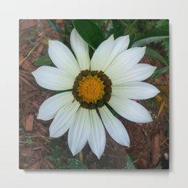 Blossom Daisy Metal Print