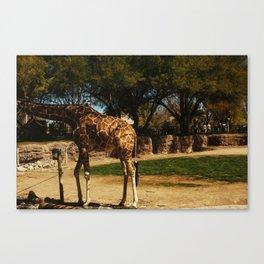 Sunny Giraffe  Canvas Print
