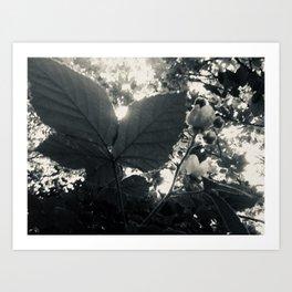 "Monochrome Botanical Art ""Raspberry Leaf sunset"" Art Print"