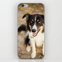 border collie iPhone & iPod Skins featuring Border Collie by Paw Prints By Jamie
