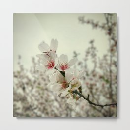 Almond Love #2 Metal Print