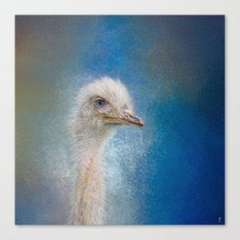 Blue Eyed Beauty - White Ostrich - Wildlife Canvas Print
