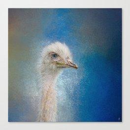 Blue Eyed Beauty - White Ostrich - Wildlife Canvas Print
