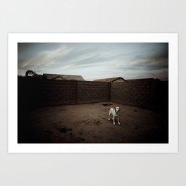 A Dog in Arizona Art Print