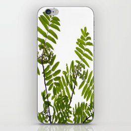 Green Rowan Leaves White Background #decor #society6 #buyart iPhone Skin