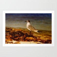 Seagull At The Keys Art Print