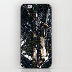 Snow Tree iPhone & iPod Skin