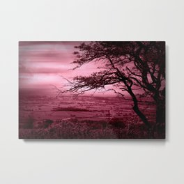 Rosy Evening Metal Print
