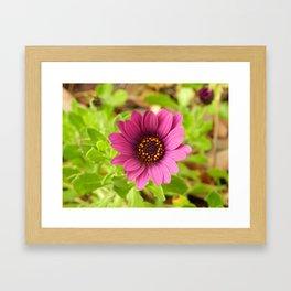 la flor Framed Art Print