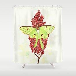 Luna Moth On Sumac Shower Curtain