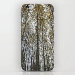 Birch Trees iPhone Skin