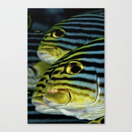 Sweetlips Canvas Print