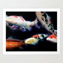 Nishikigoi(Japanese Colored Carp) 01 Art Print