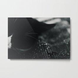 Kitten Sleep Metal Print
