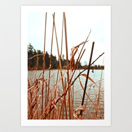 Lakeside view Art Print
