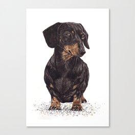 Dog-Dachshund Canvas Print