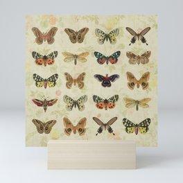 Moths & Butterflies Mini Art Print