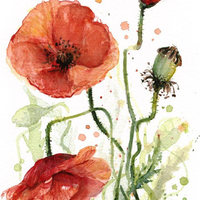 Red Poppies Watercolor Flower Floral Art Leggings