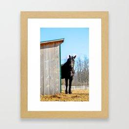 Percheron Horse by Teresa Thompson Framed Art Print