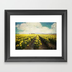 fields of daffodils Framed Art Print