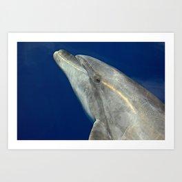 Bottlenose dolphin portrait Art Print