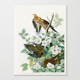 Carolina Turtle Dove, Birds of America by John James Audubon Canvas Print