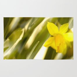 Spring atmosphere with yellow narcissus Rug
