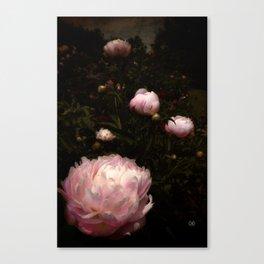 Peony 9 Canvas Print
