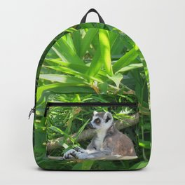 Cute and relaxed Ring-tailed lemur (lemur catta) Backpack