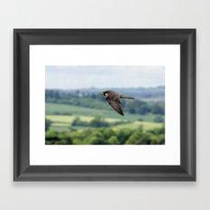 Peregrine Falcon Framed Art Print