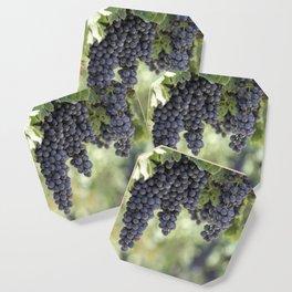 black grape grows on vineyard Coaster