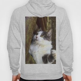 Tom, the cat Hoody