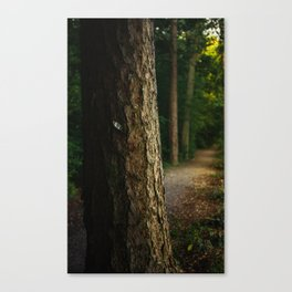 Tree in a forest Canvas Print