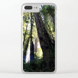 Towering redwoods in the light Clear iPhone Case