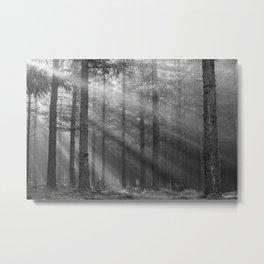 Scottish Highlands forest - Black and white - North Kessock, Highlands, Scotland Metal Print
