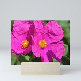 Papery Pinky Purple Rockrose by Reay of Light Photography Mini Art Print