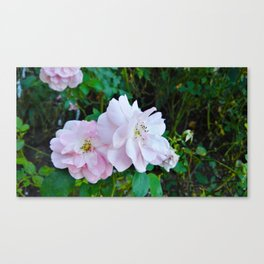 Pink end of summer flowers in bloom Canvas Print