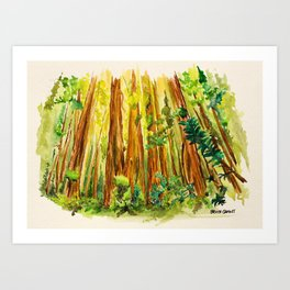 Redwood National Park Art Print