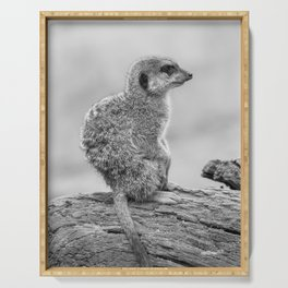 Meerkat (Black and White) Serving Tray