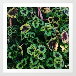 Green Leaf Flowers Art Print