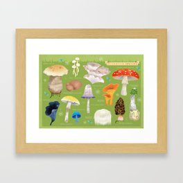 Mushroom Species Framed Art Print