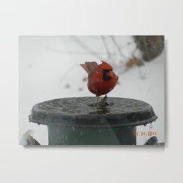 Iowa Cardinal Metal Print