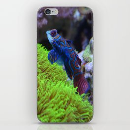 Mandarin Dragonet iPhone Skin