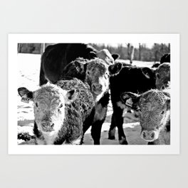 B&W Baby Cows Art Print