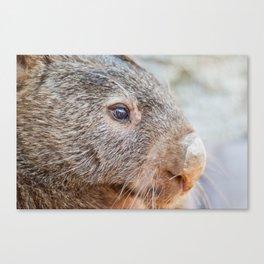 Pensive Wombat Canvas Print